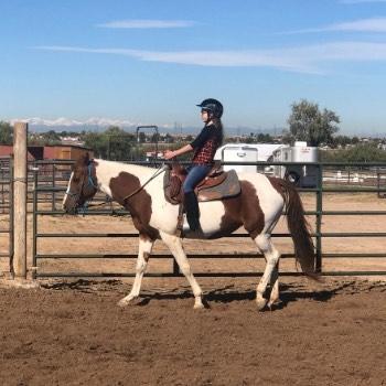 Lesson Horse Rain