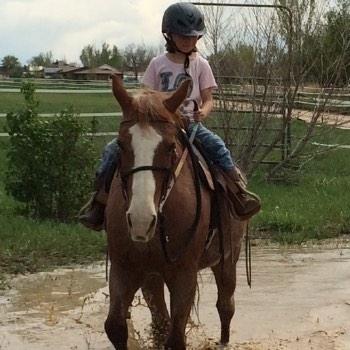 Lesson Horse Sadie